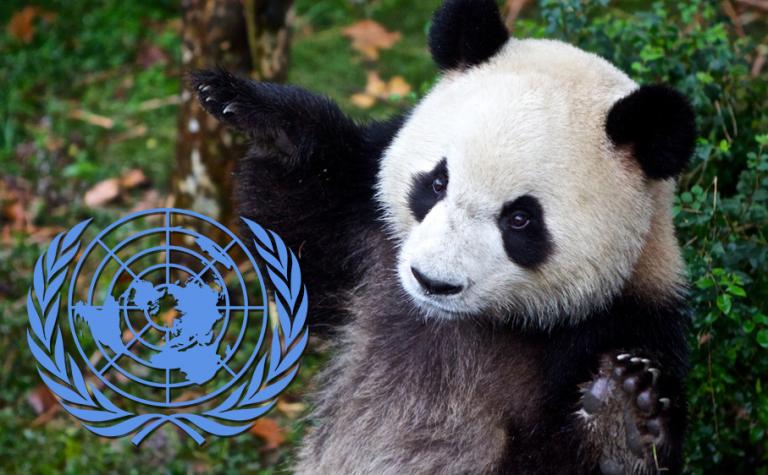 Em dia mundial, ONU celebra 25 anos de convenção para proteger biodiversidade